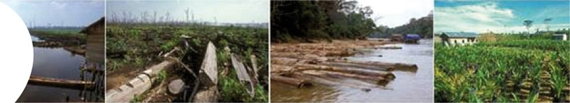 assets/Uploads/_resampled/croppedimage810147-BOVENBEELD-kalimantan2.jpg